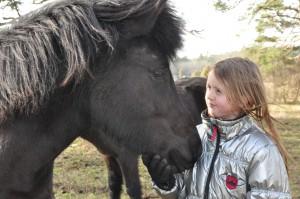 Hästar 24 feb 2014 465 (2)