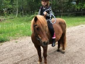 kaldhage-gard-eskelhem-djurpark-shetland-ponny-03