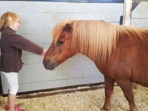 kaldhage-gard-eskelhem-djurpark-shetland-ponny-09