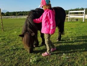 kaldhage-gard-eskelhem-djurpark-shetland-ponny-sto-01