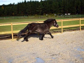 kaldhage-gard-eskelhem-djurpark-shetland-ponny-sto-04