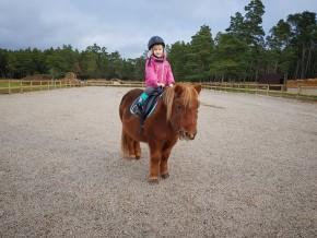 kaldhage-gard-eskelhem-djurpark-shetland-ponny-08