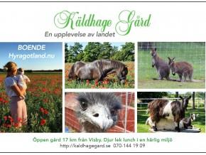 kaldhage-gard-eskelhem-djurpark-presentkort-01
