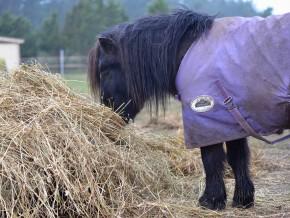 kaldhage-gard-eskelhem-djurpark-shetland-ponny-sto-06