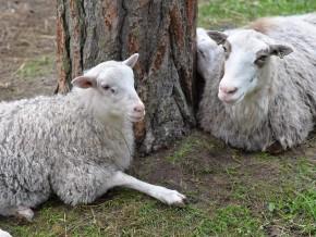 kaldhage-gard-eskelhem-djurpark-klovsjofar-far-20