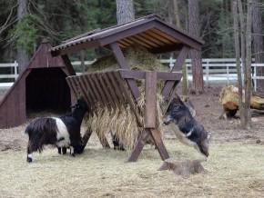 kaldhage-gard-djurpark-lantrasget-09